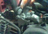 Yamaha PW 80 thumbnail